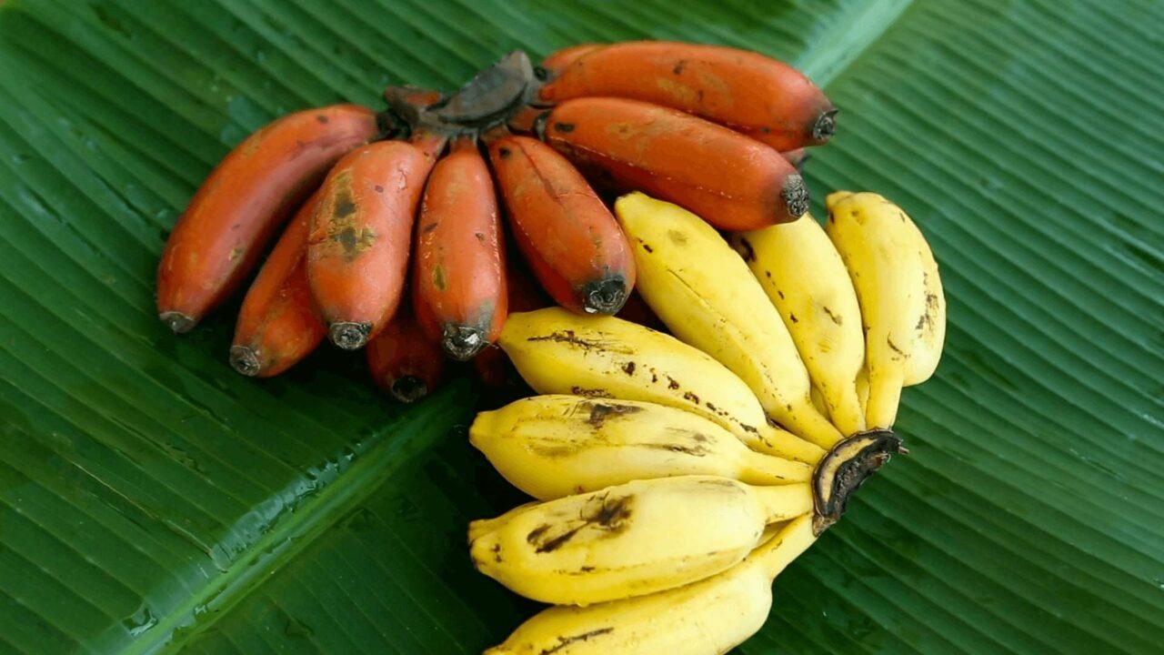 healthy banana